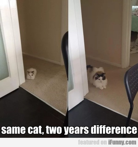 same cat, two years difference