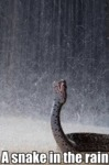 A Snake In The Rain