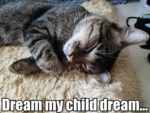 Dream My Child Dream