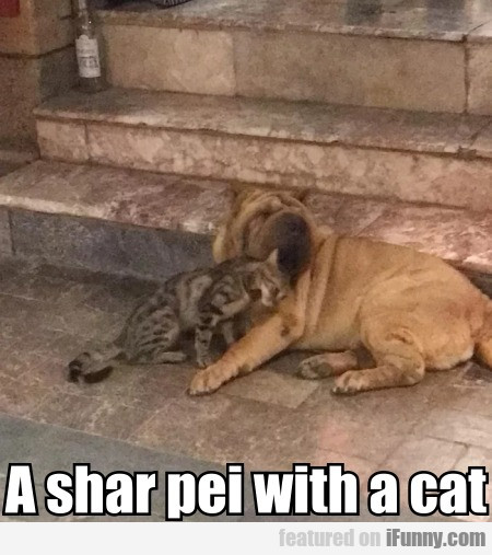 A shar pei with a cat