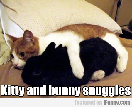 Kitty and bunny snuggles