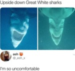 Upside Down Great White Sharks