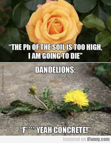The Ph Of Soil Is Too High