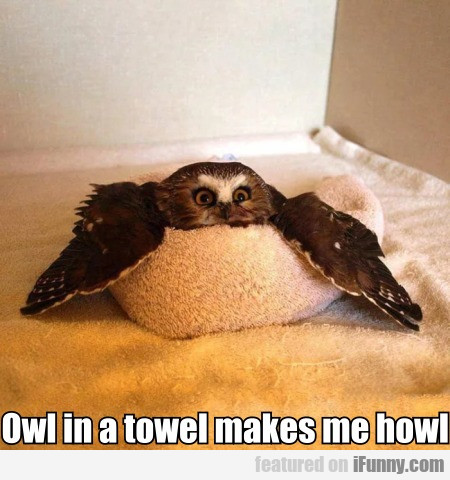 Owl In A Towel Makes Me Howl