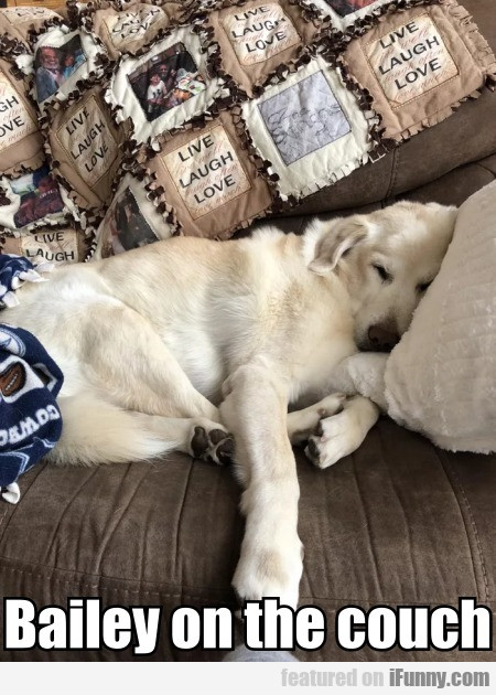 Bailey on the couch