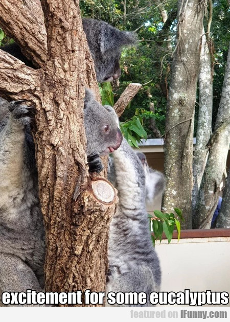 Excitement For Some Eucalyptus