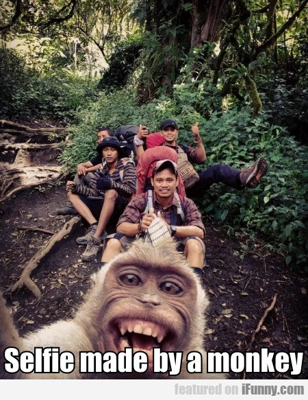 Selfie made by a monkey