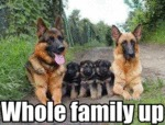 Whole Family Up