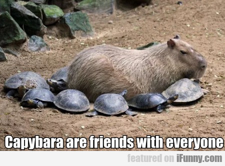 Capybara Are Friends With Everyone