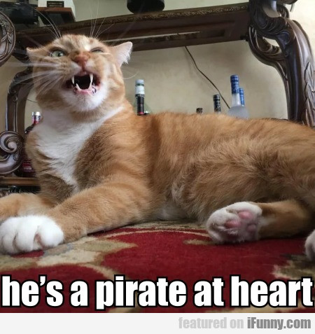He's A Pirate At Heart