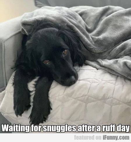 Waiting For Snuggles After A Ruff Day