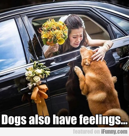 Dogs Also Have Feelings