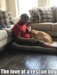 The Love Of A Rescue Dog