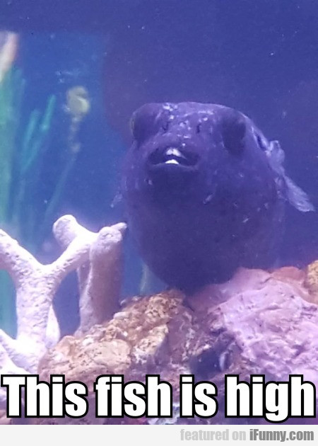 This fish is high