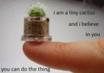 I'm A Tiny Cactus And I Believe In You