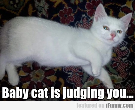 Baby cat is judging you