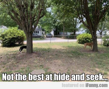 Not the best at hide and seek