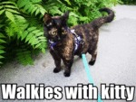 Walkies With Kitty