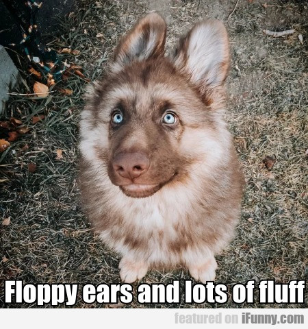 Floppy Ears And Lots Of Fluff