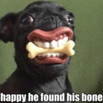 Happy He Found His Bone