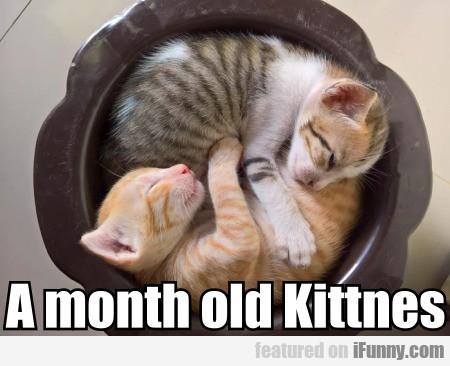 A month old Kittnes