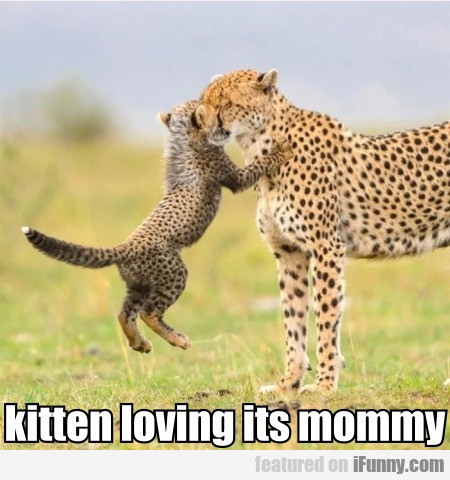 kitten loving its mommy