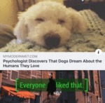 Psychologist Discovers That Dogs Dream About...