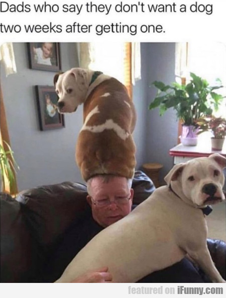 Dads Who Say They Don't Want A Dog Two...