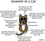 @iizcat: Anatomy Of A Cat