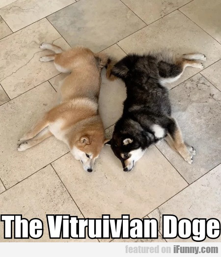 The Vitruivian Doge