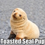 Toasted Seal Pup