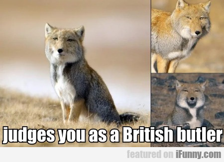 Judges You As A British Butler