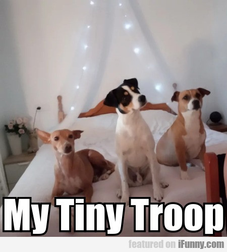My Tiny Troop