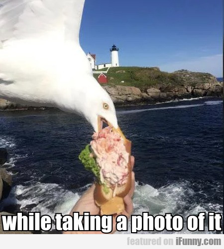 While Taking A Photo Of It