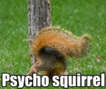 Psycho Squirrel