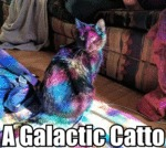 A Galactic Catto