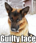 Guilty Face