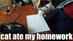 Cat Ate My Homework