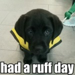 Had A Ruff Day