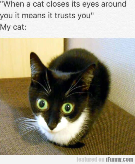 When a cat closes its eyes around you it...