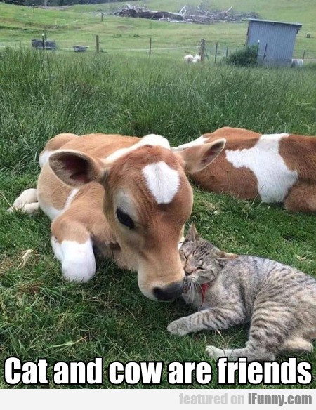 Cat and cow are friends