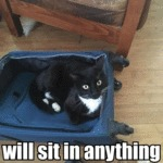 Will Sit In Anything