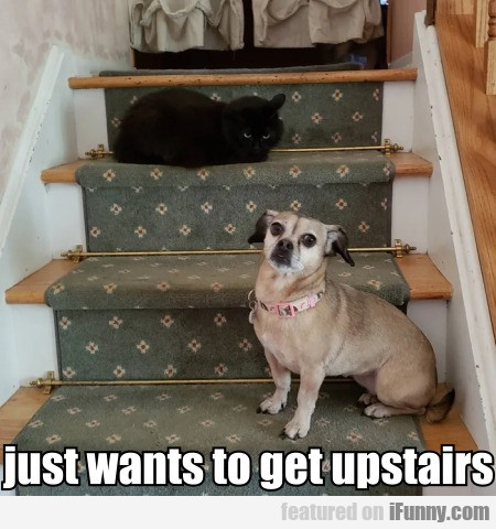 Just Wants To Get Upstairs
