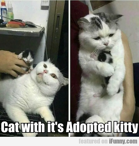 Cat with it's Adopted kitty