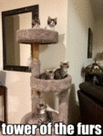 Tower Of The Furs