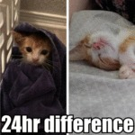 24hr Difference