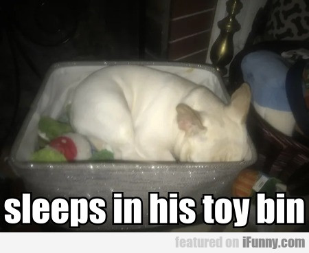 Sleeps In His Toy Bin