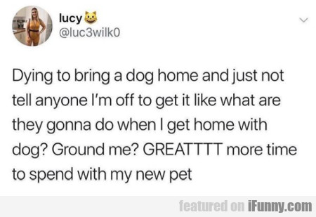 Dying To Bring A Dog Home And Just Not Tell Anyone