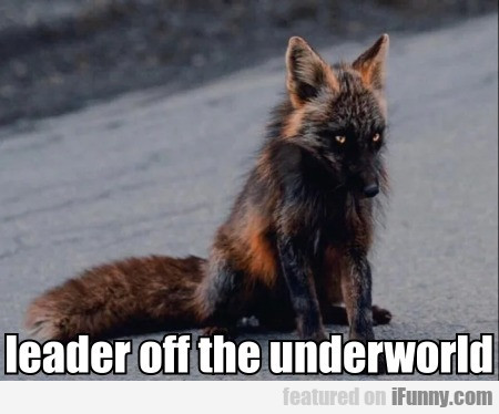 Leader Off The Underworld