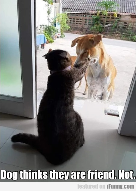 Dog Thinks They Are Friend. Not
